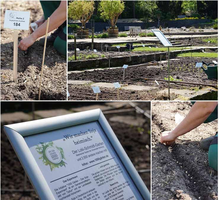 1000 Gärten Experiment - Aussaat im Botanischen Garten Hamburg