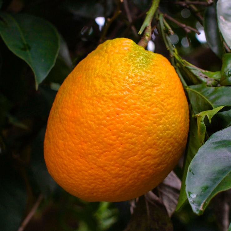 10 Dinge, die du mit Orangen machen  kannst - The Vegetarian Diaries